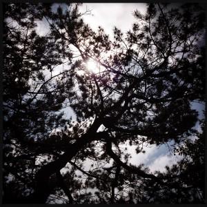 150527 bomen