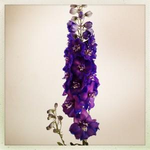 130906 bloemen voor Arnold