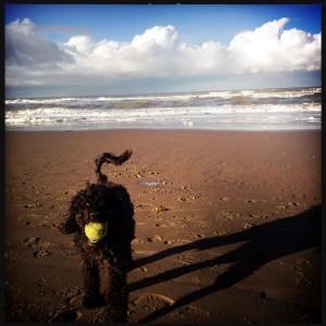 141206 met Beau op het strand