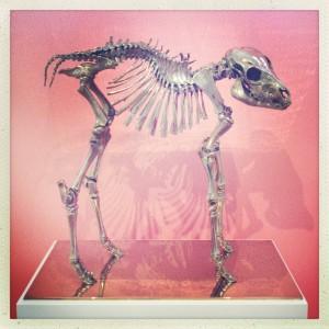 130609 skelet