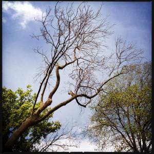 140420 bomen en lucht
