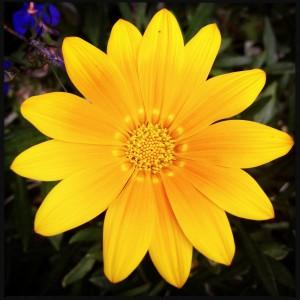 140803 bloem