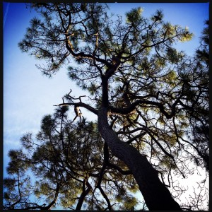 150107 boom en lucht