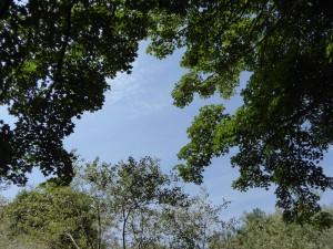 140727 bomen en lucht