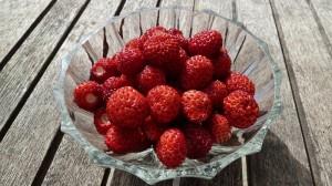 140521_29 wilde aardbeien